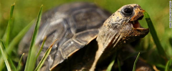 130201105130-tortoise-story-top