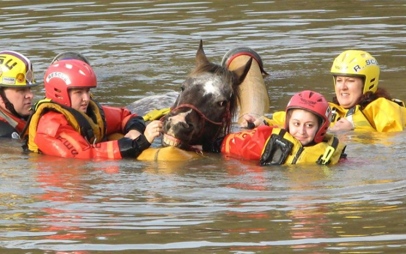 Courageous Rescuers Risk it all to Save Hundreds of Animals From Louisiana Floods