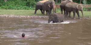 Watch Baby Elephant Rush into River to 'Rescue' Her Favorite Human