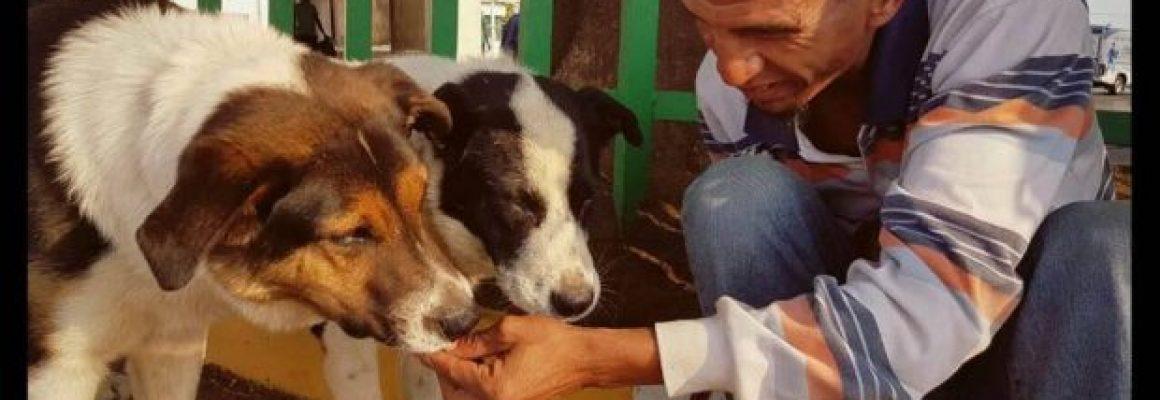 Melville-Community-Homeless-Man-Dogs-620x400